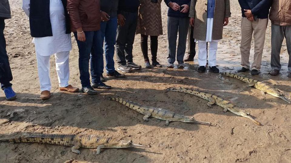 The animals were transported in trucks to the Gagrewal village, 30 km from district headquarters, from Chhatbir zoo in Mohali. e in Tarn Taran on Sunday.