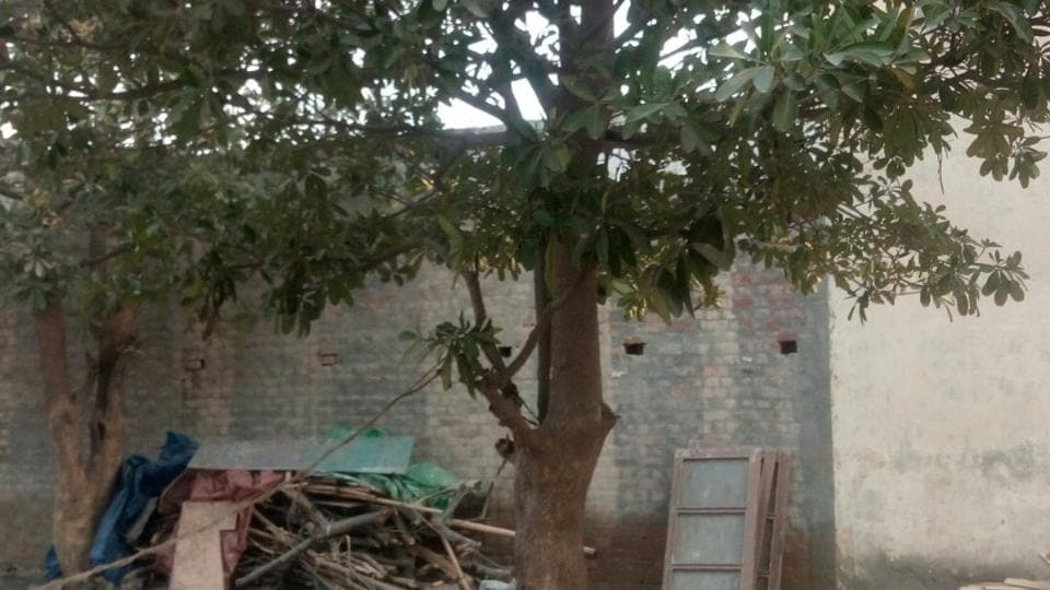 Two teenage girls were found hanging from a tree in near shanties in Barola village in Noida's Sector 49 early on Tuesday morning