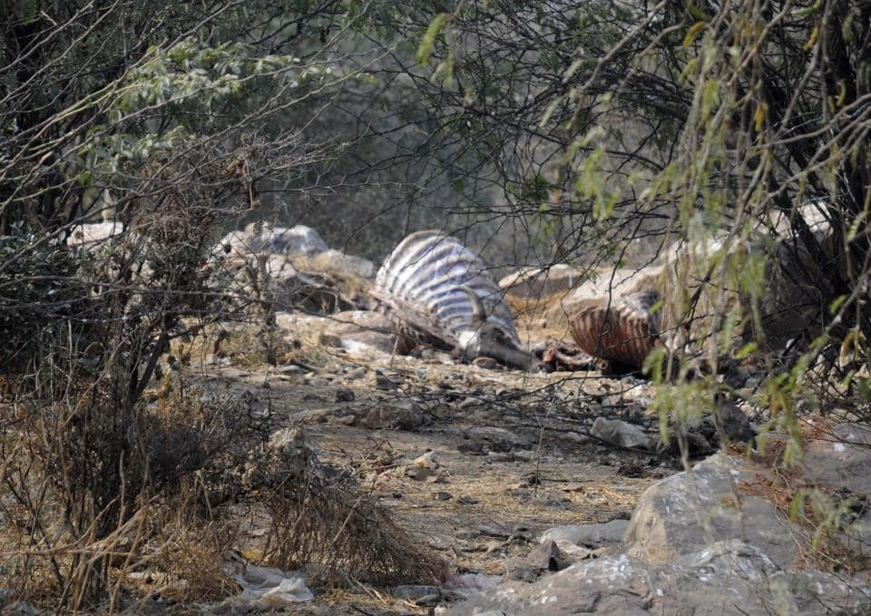 A delegation of 15 environmentalists met the Union minister on Thursday and urged him to take the form a special task force to curtail poaching and illegal tree felling in the eco-sensitive areas of the Aravallis.