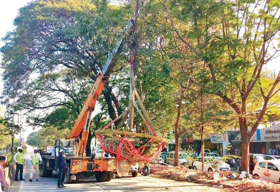 Pune Maha Metro Tree Plantation