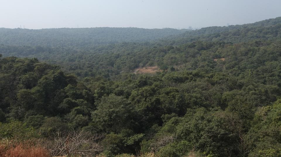 The forest land lost in the last three years is roughly equivalent to the area of Mumbai's island city, which is 65sq km (Brihanmumbai Municipal Corporation data).
