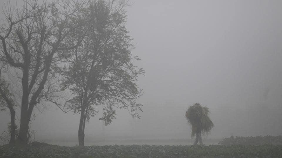A farmer carries hay as walks across a field through heavy fog on the outskirts of Jammu.