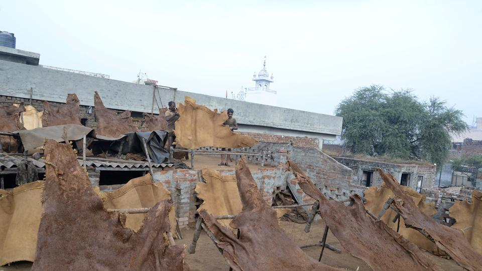 Workers spreading processed leather for drying at Boota Mandi in Jalandhar. Locals have alleged that tanneries in Jalandhar district were discharging effluents into drains
