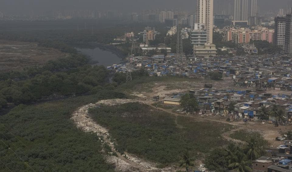 Mumbai,mangroves,mangrove cell