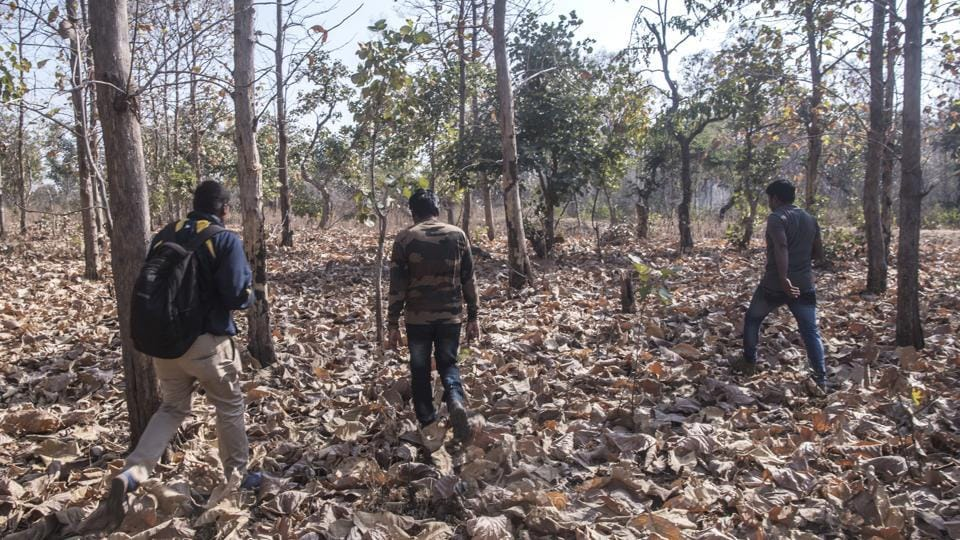 Forest officials track a man-eating tigress inside a forest in Pandharkawada region. 70 people from a forest department team which includes veterinary and range officers, and members of the NGO Wildlife Conservation Trust  are struggling to track the animal considered behinf the attacks. (Pratik Chorge / HT Photo)
