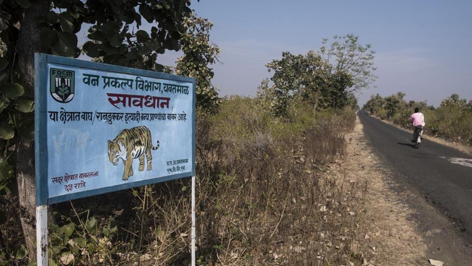 The forest department has put up signs on roads that they consider danger zones. As the clock continues to tick, the villagers still have doubts about how the forest department is going about things. They don't understand why the tigress can't just be shot and the delay is making them jittery. (Pratik Chorge / HT Photo)