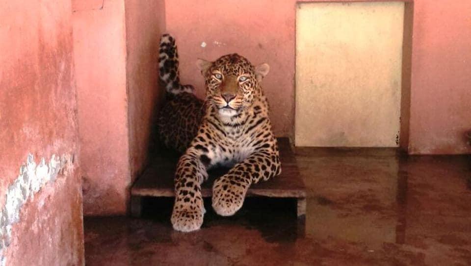 Uttarakhand News,Central Zoo Authority,Animal Welfare Board