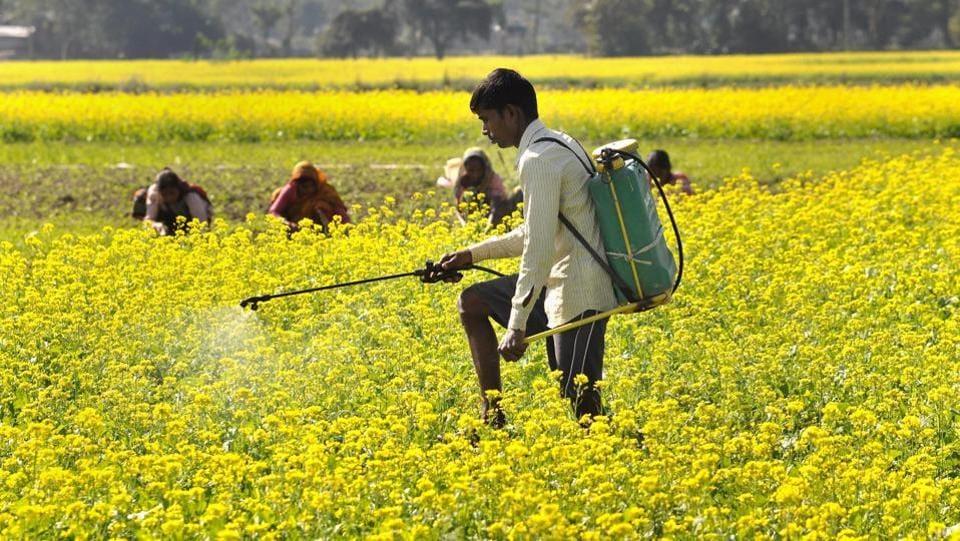 Rajasthan news,Mustard,Prabhu Lal Saini
