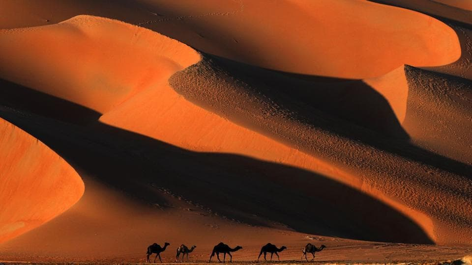 Camels walk across the Liwa desert, west of the Gulf emirate of Abu Dhabi, during the Liwa 2018 Moreeb Dune Festival on January 02, 2018. The festival attracts participants from around the Gulf region and includes car, bike, falcon, camel and horse races along with activities aimed at promoting the country's folklore. (Karim Sahib / AFP)