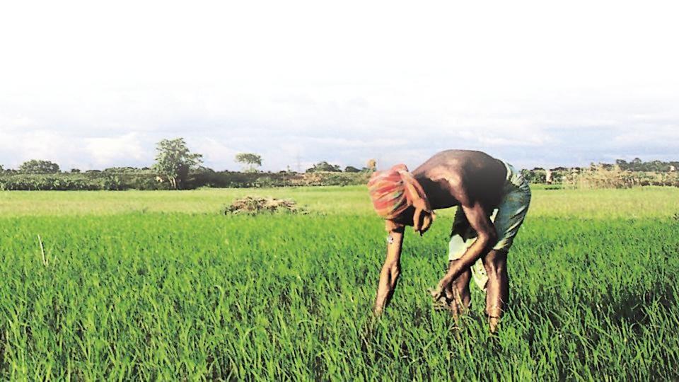Farmers,Upper caste farmers,Loan waiver