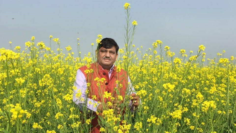 Agriculture minister Prabhu Lal Saini inspecting mustard crops Rajasthan.