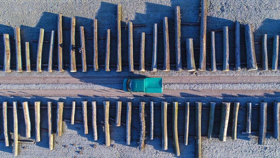 An aerial picture taken with a drone on January 8, 2018 shows wood logs lined up at the storage facility of a Brandebourg forestry company in the eastern German town of Chorin. (Patrick Pleul / dpa / AFP)
