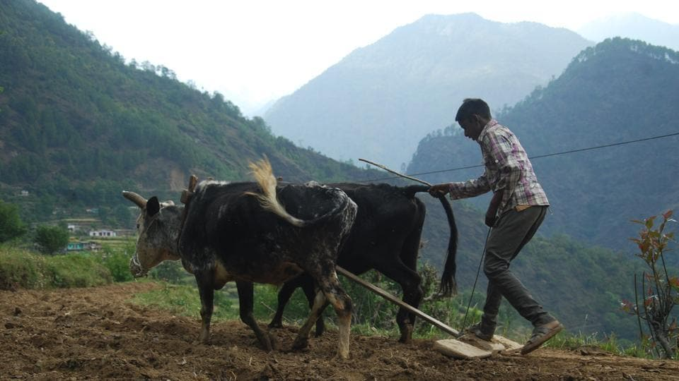 The government plans to make a sizeable budgetary allocation for agriculture and allied services because the state is known for its agri-pastoral economy.