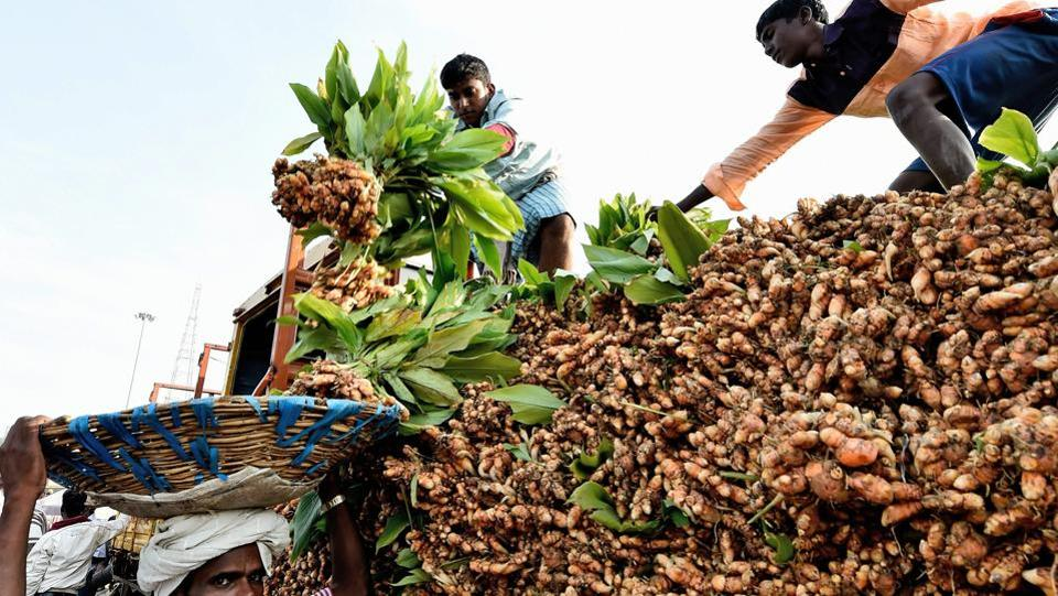 Vendors unloading turmeric for sale at Koyambedu vegetable market on the occasion of Pongal festival in Chennai. (PTI)