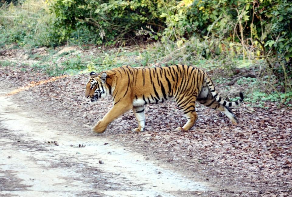 Uttarakhand has now Corbett and Rajaji tiger reserves.  The Nandhaur wildlife sanctuary in Nainital district and Surai range are proposed to be new reserves.