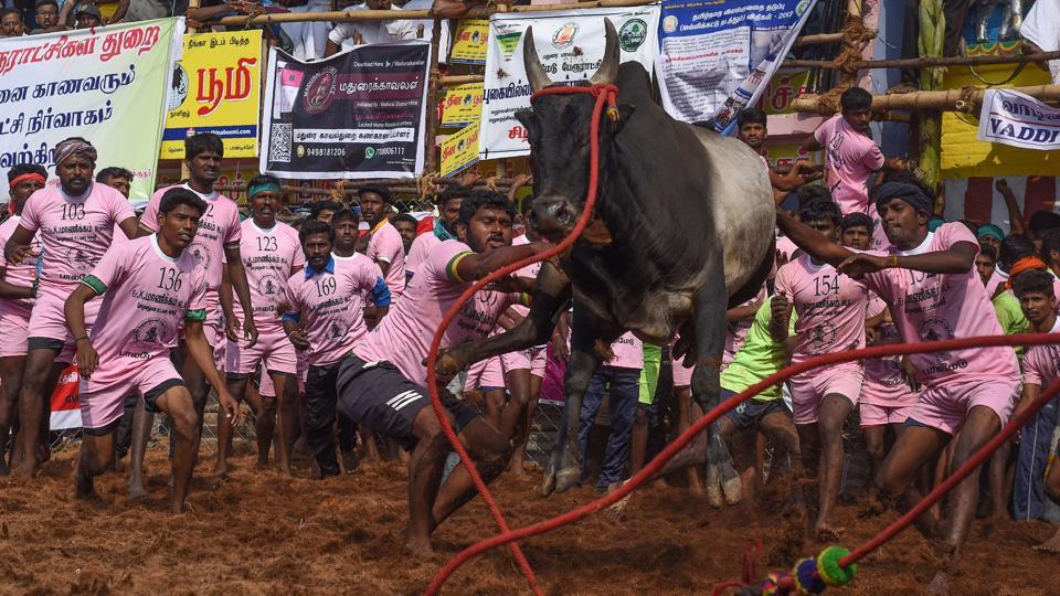 Participants try to control a bull during Jallikattu in Palamedu on the outskirts of Madurai on Monday.