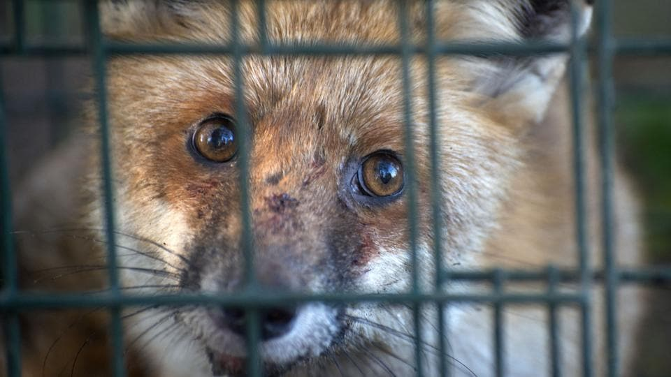 Fur farms,Fox fur,Mink fur