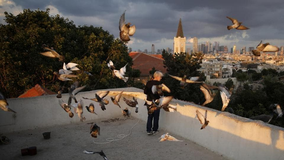 A woman feeds birds in her daily sunset ritual on her rooftop in Tel Aviv. (Corinna Kern / REUTERS)