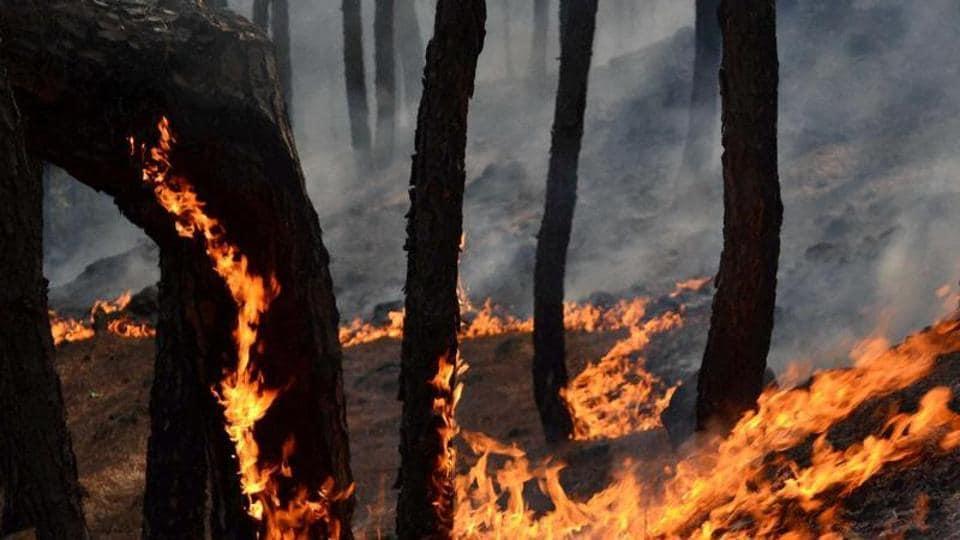 Forest fire,Rajouri-Poonch belt,Jammu and Kashmir