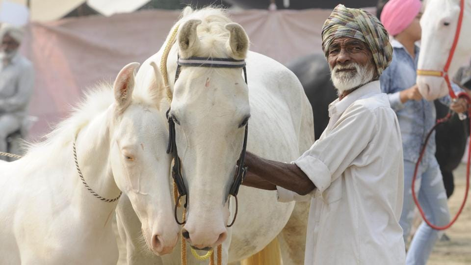 A man with his horses during the cattle fair at Kalyan Village.