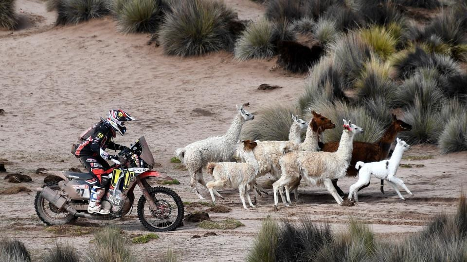 Diego Martin Duplessis, rides his Honda through a pack of llamas between La Paz and Uyuni, Bolivia. 337 vehicles kicked off the 2018 Dakar Rally -- the world's second largest motoring event after Formula 1-- on January 6, embarking on a fortnight through the South American wilderness, ripping through deserts, high altitude terrain and sprawling coastlines. (Franck Fife / Pool via AP)