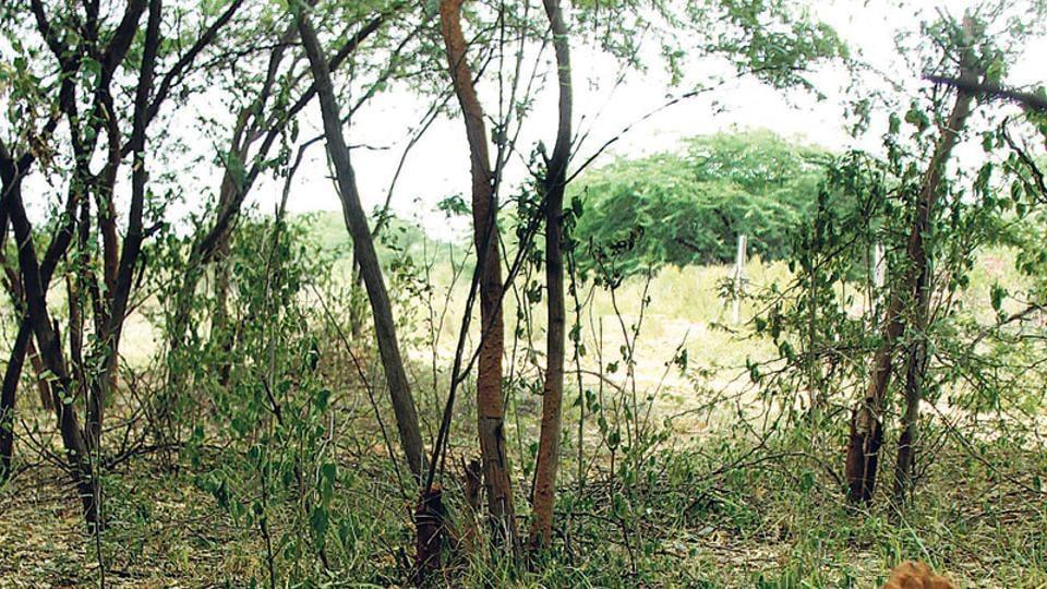 Gurgaon crime,gurugram crime,Sohna news