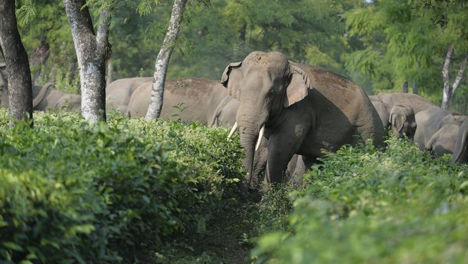 contraceptives for wild animals,Wildlife Institute of India,Dehradun