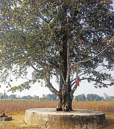 Uttarakhand news,Jumbo attacks,Haldwani villagers