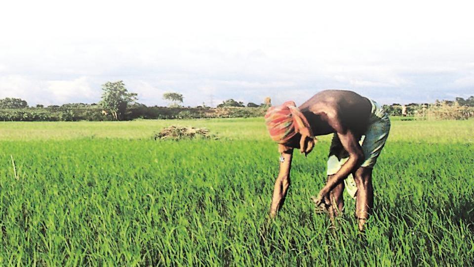 Farmers,Farm output,Indian economy