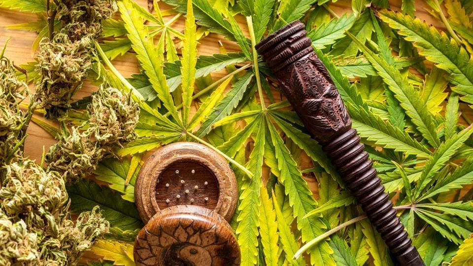 Marijuana is one of the most widely used recreational drugs among individuals of reproductive age.