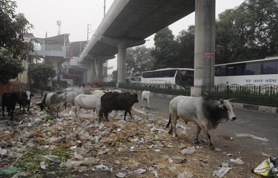 Lucknow,Uttar Pradesh,Mess