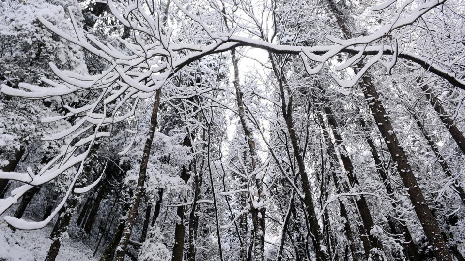 Tourists throng Shimla,snowfall,snowfall in Shimla