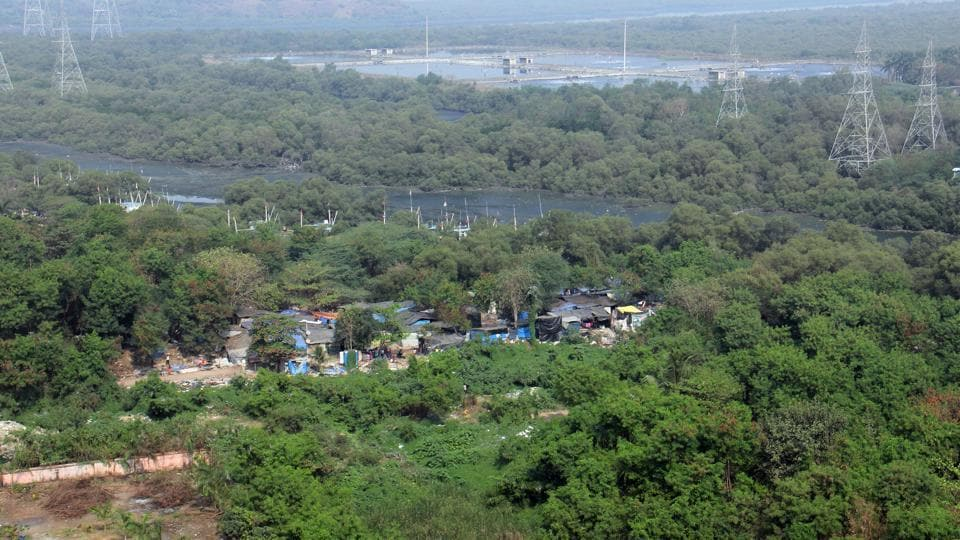 Residents who are monitoring the illegal reclamation of wetlands in the area, found over 500 shanties built on the destroyed mangroves