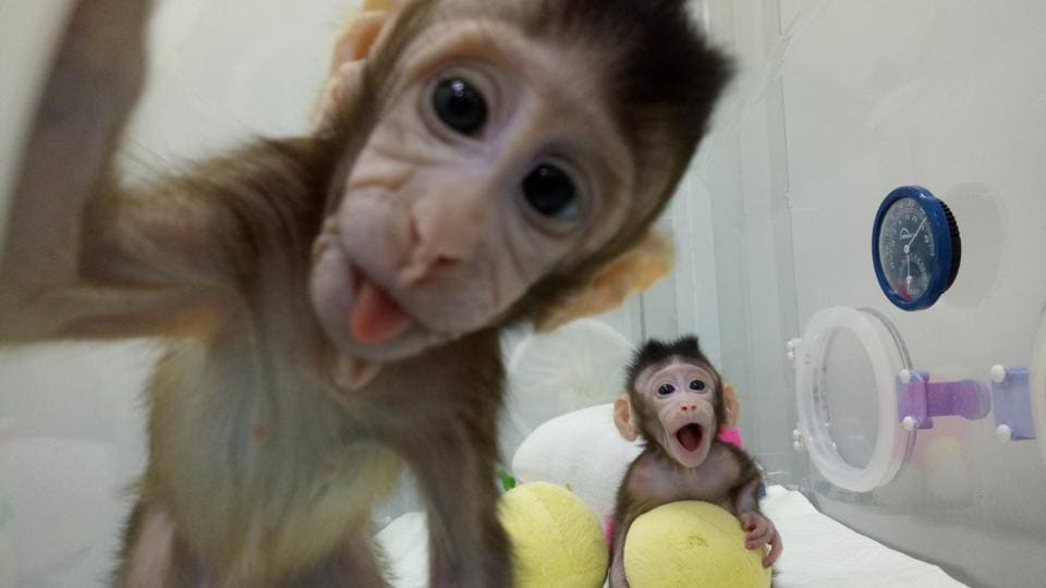 Science behind Dolly the Sheep creates monkey clones