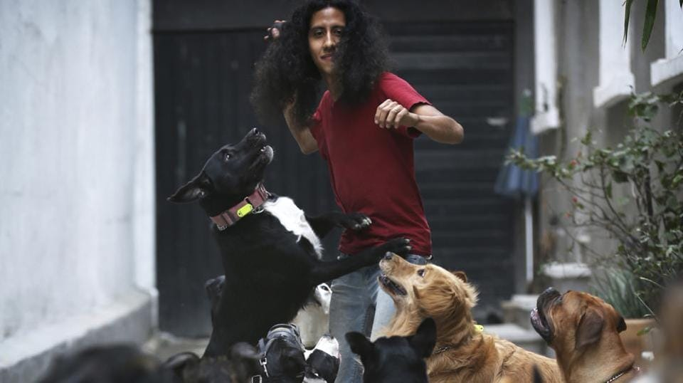 "Jair Benavides plays with his dogs at their home and shelter in Mexico City. He runs the shelter with his wife, Miriam Gutierrez de Velasco. They go by their ""dog family"" nicknames of Jair Solcan and Miriam Luzcan, which respectively translate to ""Sundog"" and ""Lightdog"" in English. This unique shelter for dogs — and one pig — is struggling to get back on its feet after Mexico's devastating earthquake four months ago. (Marco Ugarte / AP)"