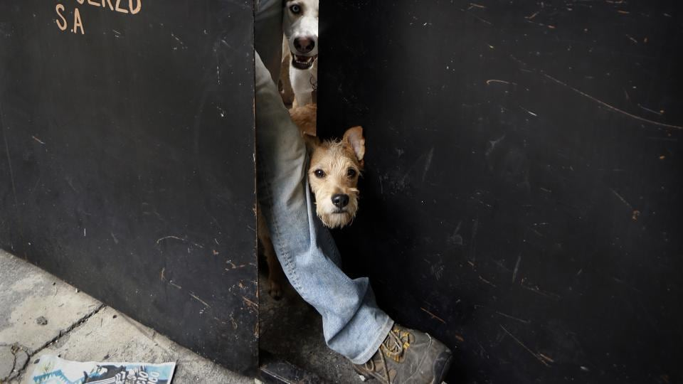 "A dog peeks out the door of the  dog shelter in Mexico. Mariam estimates she has rescued and placed in adoption upward of 2,000 dogs over the last couple of decades. ""They are part of my life,"" she says. ""They have taught me unconditional love."" (Marco Ugarte / AP)"