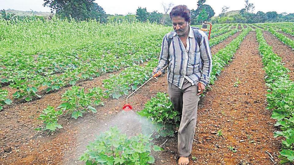 Every year there are about 10,000 reported cases of pesticide poisoning in India