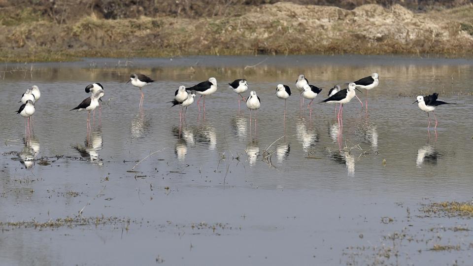 basai birding area,gurgaon basai birds,delhi news