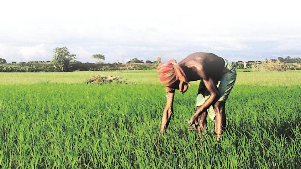 The Economic Survey said on Monday the footprint of climate change is evident and extreme weather adversely impacts agricultural yields.