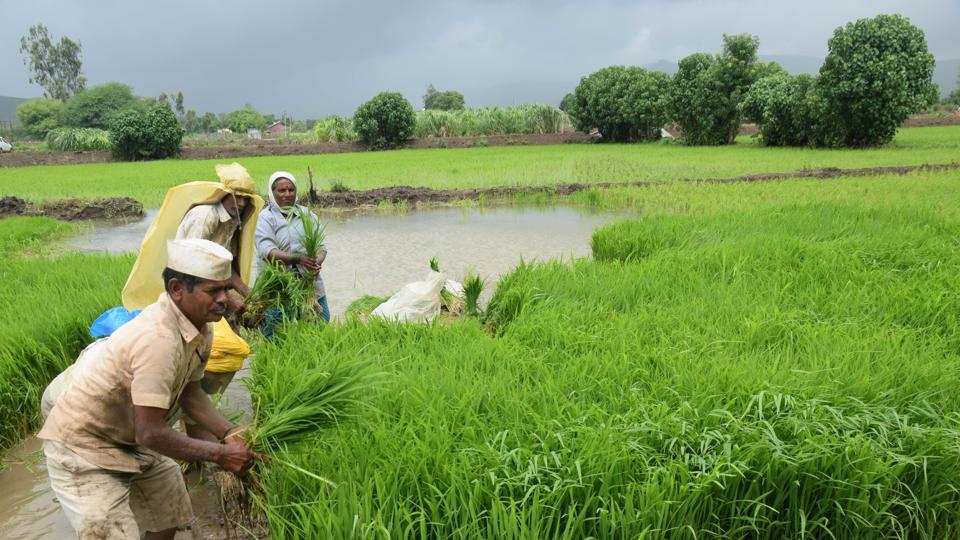 Climate change — whose imprint on Indian agriculture is already visible —  might reduce farm incomes by up to 20-25 %  in the medium term, the Survey for 2017-18 said.