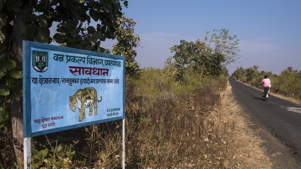 The Maharashtra forest department has put up signs and red flags on roads that they consider danger zones.