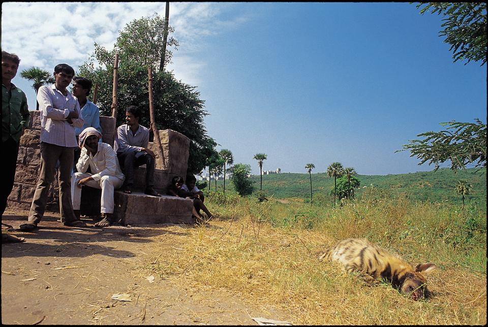 One of the photographs clicked bySujoy Monga shows a dead hyena that was found on the edge of the national park.