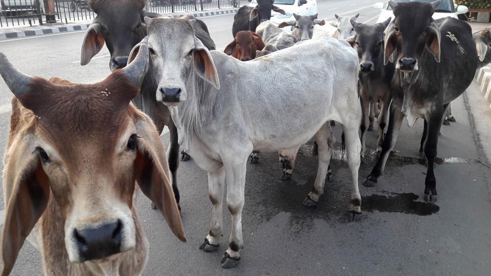 Karnataka BJP,24 hour Yagna,Cow