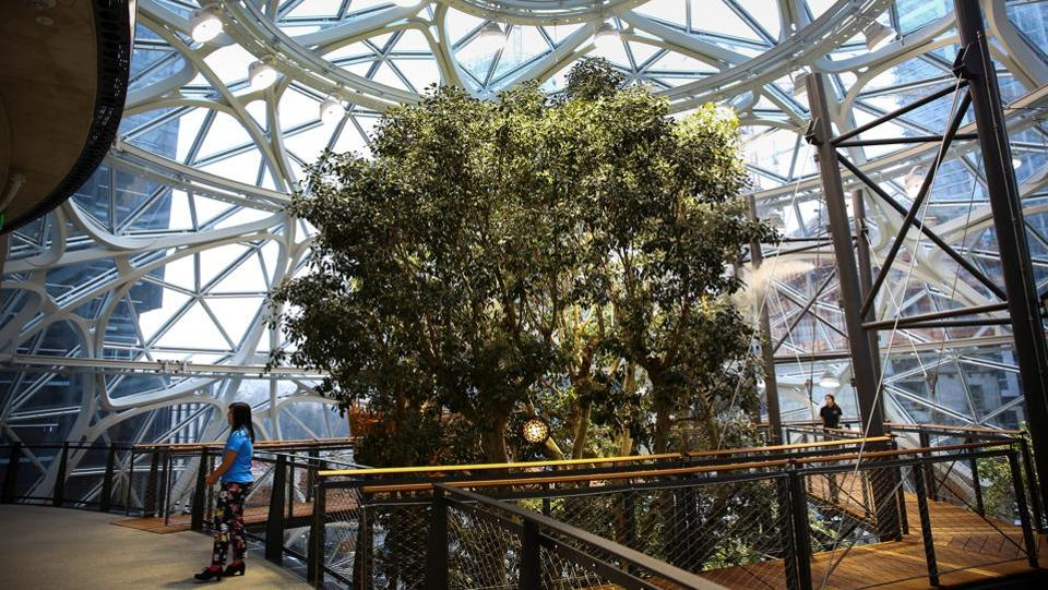 A walkway surrounds the centrepiece of the building, a 49-feet tall Ficus rubiginosa tree, nicknamed
