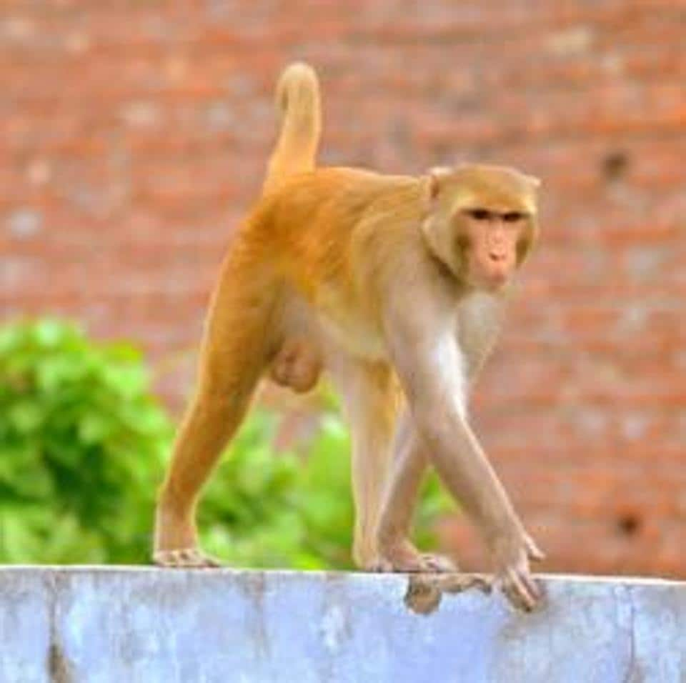 The forest department recently floated tenders for monkey catching at Haridwar in which five groups from Uttar Pradesh came forward. None from Uttarakhand came forward.