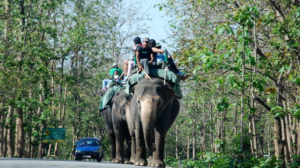 Rajiv Gandhi Wildlife Sanctuary,Nallamala forests,Telangana government