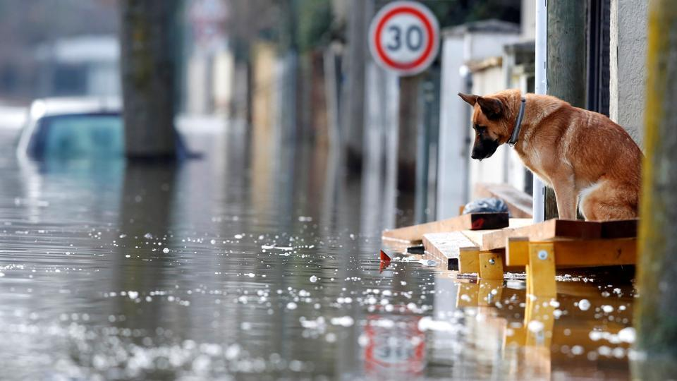 A dog at the entrance of a house in the flooded residential area of Villeneuve-Saint-Georges. Flood monitoring agency Vigicrues said the water levels in Paris hit a maximum height of 5.84 meters on the Austerlitz scale early Monday. That's below initial fears last week, and well below record levels of 8.62 meters in 1910, but still meters above normal levels of about 1.5 meters. (Christian Hartmann / REUTERS)