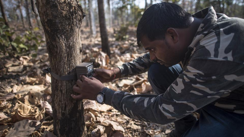 The forest department has set up at least eight different teams, along with veterinary doctors and forest personnel, in the area to capture and tranquilise the animal.