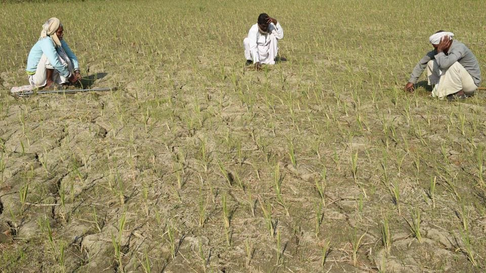 Farmers sit in a semi-dried up paddy field at Likhambha village of Sanad taluka, some 40 km from Ahmedabad.