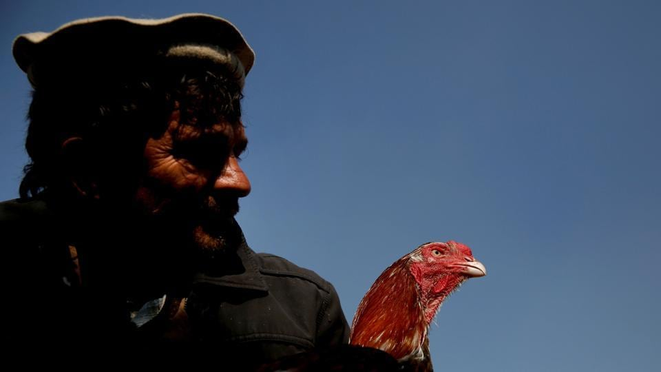 Sayed Mohammad Ali holds his rooster at the Ka Faroshi bird market in Kabul, Afghanistan. For some Afghans weighed down by decades of war and struggle, some comfort and distraction can be found in the company of birds. (Mohammad Ismail / REUTERS)